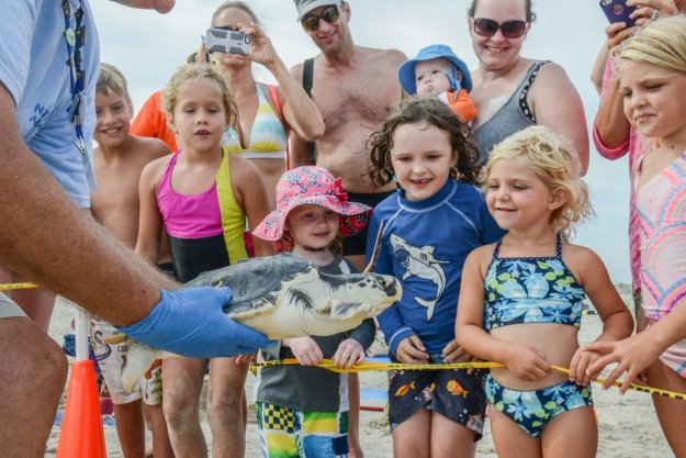 endangerment of kemp s ridley sea turtles In new england, the endangered kemp's ridley sea turtle strands in mass numbers every year erin mangan sullivan phd candidate in the marine science.