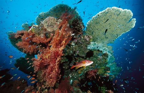 A variety of organisms make their home on this tropical coral reef in Indonesia.