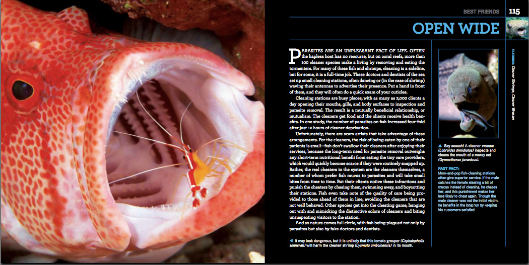 Open Wide Photo Spread from Citizens of the Sea