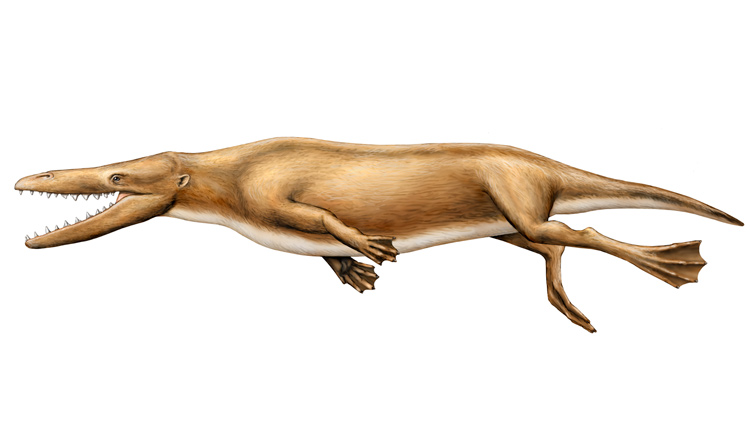 Illustration of a four-legged proto-whale with webbed feet.<div class='credit'><strong>Credit:</strong> Illustration of a four-legged proto-whale with webbed feet.</div>
