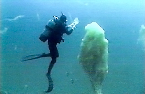 Giant mucus blobs growing in the Mediterranean because of warmer water.<div class='credit'><strong>Credit:</strong> Giant mucus blobs growing in the Mediterranean because of warmer water.</div>
