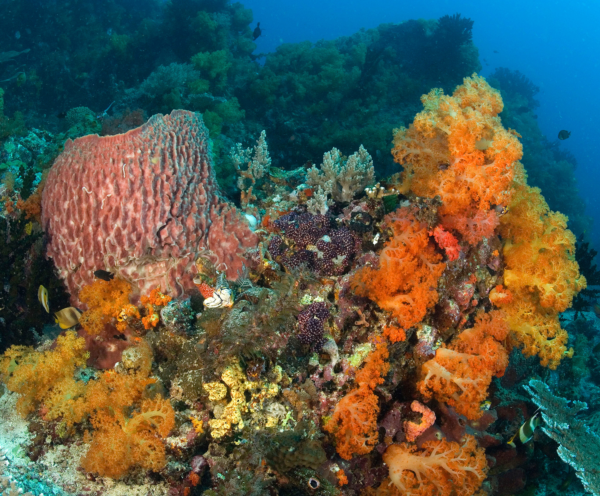 Corals, sponges, and algae are the major components of most coral reef communities as shown in this picture.<div class='credit'><strong>Credit:</strong> Corals, sponges, and algae are the major components of most coral reef communities as shown in this picture.</div>