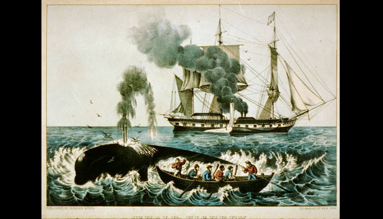 Yankee Whalers: An 1856 Currier & Ives print shows whalers harpooning a right whale.<div class='credit'><strong>Credit:</strong> Yankee Whalers: An 1856 Currier & Ives print shows whalers harpooning a right whale.</div>