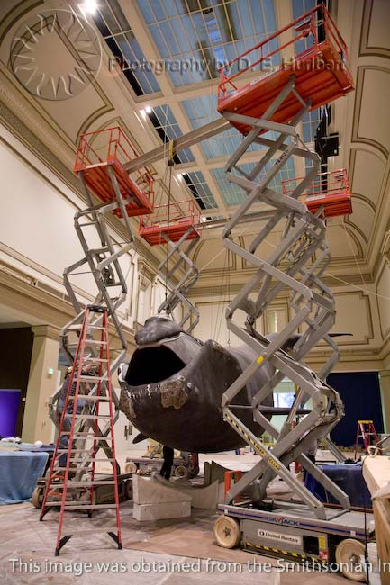 Scaffolding and supports support a life-size model of a right whale in the national Museum of Natural History.<div class='credit'><strong>Credit:</strong> Scaffolding and supports support a life-size model of a right whale in the national Museum of Natural History.</div>
