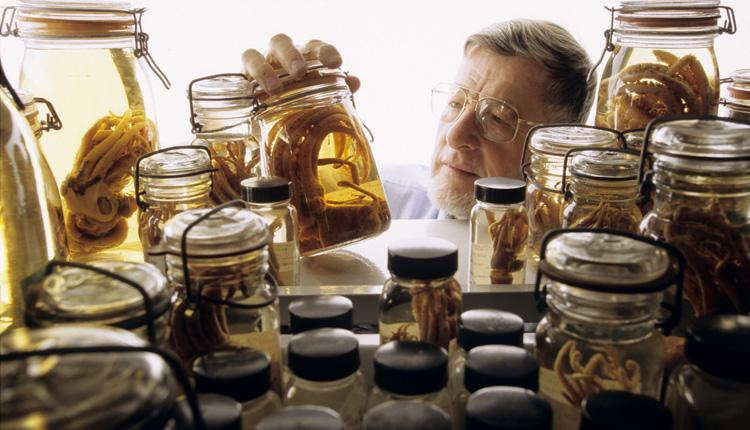 Squid expert Dr. Clyde Roper examines specimens stored in jars in the Smithsonian collection.<div class='credit'><strong>Credit:</strong> Squid expert Dr. Clyde Roper examines specimens stored in jars in the Smithsonian collection.</div>