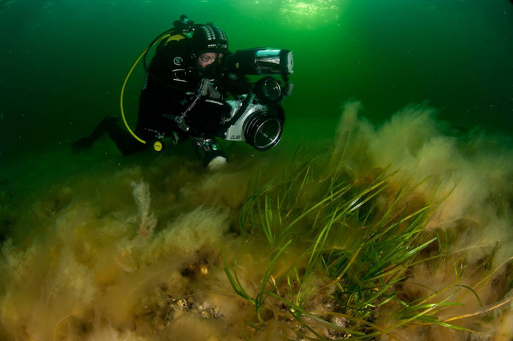 An underwater photographer captures life in the cold Baltic Sea during a 2011 Oceana expedition. <div class='credit'><strong>Credit:</strong> An underwater photographer captures life in the cold Baltic Sea during a 2011 Oceana expedition. </div>