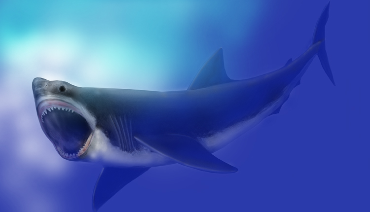 Illustration of the extinct shark Carcharodon megalodon.<div class='credit'><strong>Credit:</strong> Illustration of the extinct shark Carcharodon megalodon.</div>