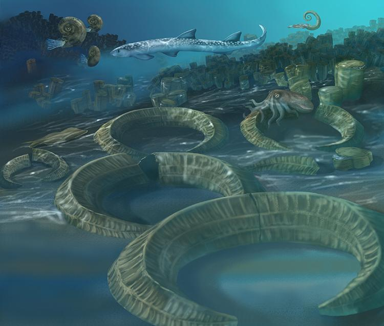 A rendering of an underwater marine scene depicting life ~145-65 million years ago, when rudist clams were the major reef builders.<div class='credit'><strong>Credit:</strong> A rendering of an underwater marine scene depicting life ~145-65 million years ago, when rudist clams were the major reef builders.</div>