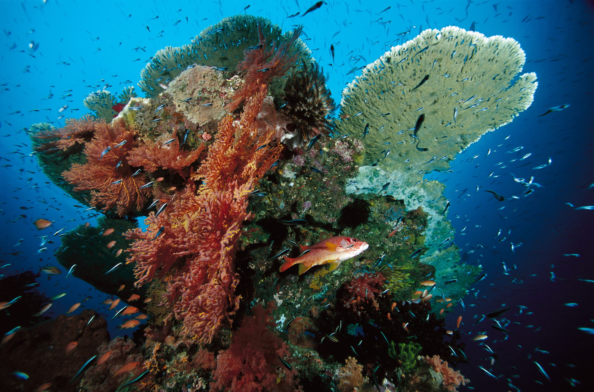 A variety of organisms make their home on this tropical coral reef in Indonesia.<div class='credit'><strong>Credit:</strong> A variety of organisms make their home on this tropical coral reef in Indonesia.</div>