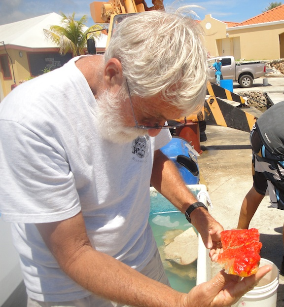 A scientists examines a sponge specimen collected in the Caribbean. <div class='credit'><strong>Credit:</strong> A scientists examines a sponge specimen collected in the Caribbean. </div>