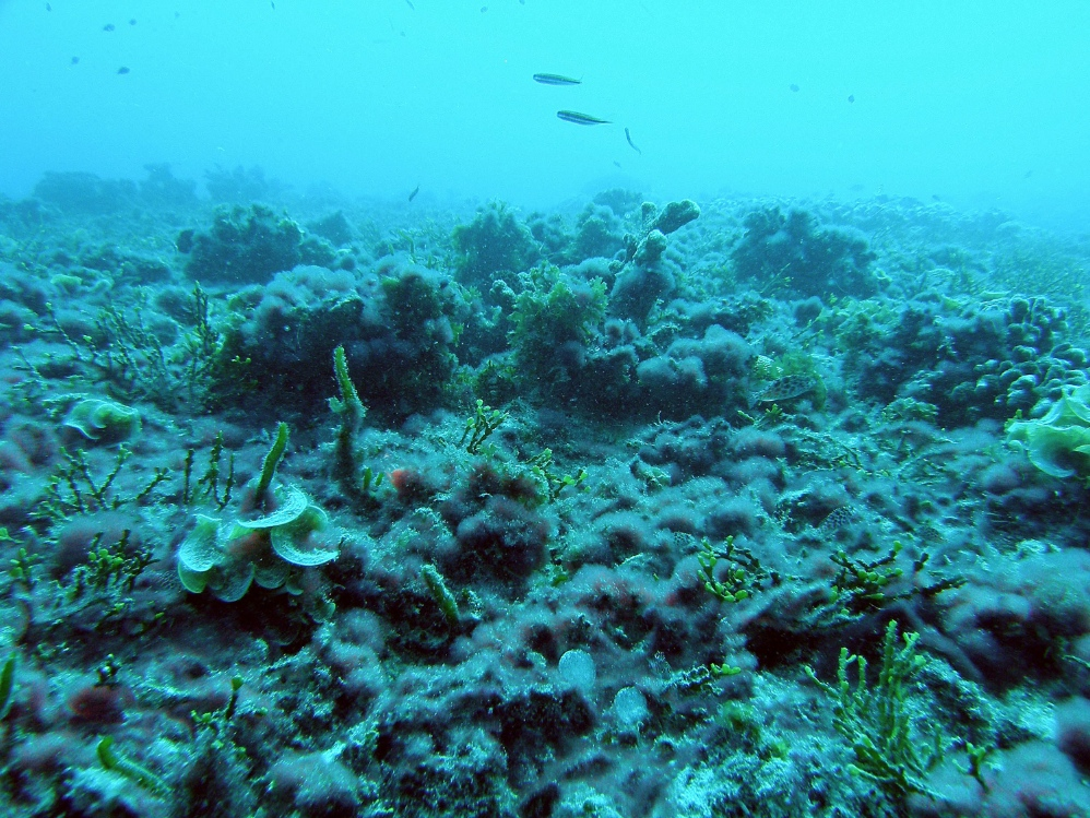 Algae has overtaken this coral reef off heavily populated Kiritimati, or Christmas Island.<div class='credit'><strong>Credit:</strong> Algae has overtaken this coral reef off heavily populated Kiritimati, or Christmas Island.</div>