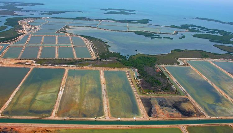 Mangroves are being decimated by human development, like this shrimp farm in Belize.<div class='credit'><strong>Credit:</strong> Mangroves are being decimated by human development, like this shrimp farm in Belize.</div>