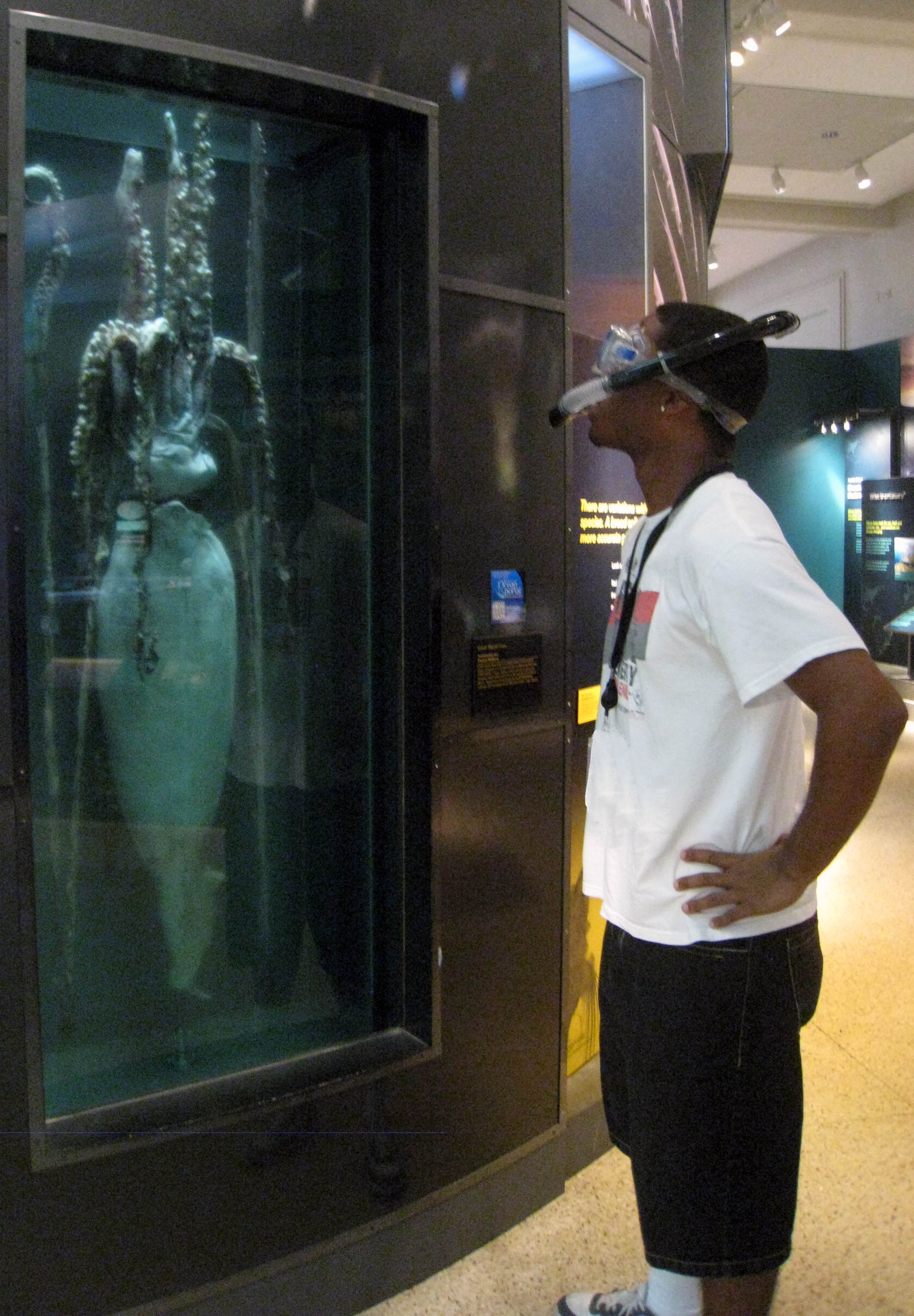 a photo of Ocean Portal intern Brandon adkins in snorkel gear looking at a preserved giant squid in the Smithsonian's Sant Ocean Hall<div class='credit'><strong>Credit:</strong> a photo of Ocean Portal intern Brandon adkins in snorkel gear looking at a preserved giant squid in the Smithsonian's Sant Ocean Hall</div>