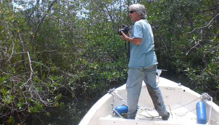 "Dr. Ilka C. ""Candy"" Feller studies mangroves in the small streams of Panama.<div class='credit'><strong>Credit:</strong> Dr. Ilka C. ""Candy"" Feller studies mangroves in the small streams of Panama.</div>"