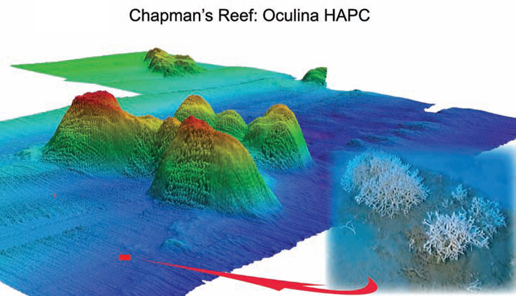 3-D map of Chapman's Reef. Produced in 2005 with multibeam sonar from an autonomous underwater vehicle (AUV).<div class='credit'><strong>Credit:</strong> 3-D map of Chapman's Reef. Produced in 2005 with multibeam sonar from an autonomous underwater vehicle (AUV).</div>