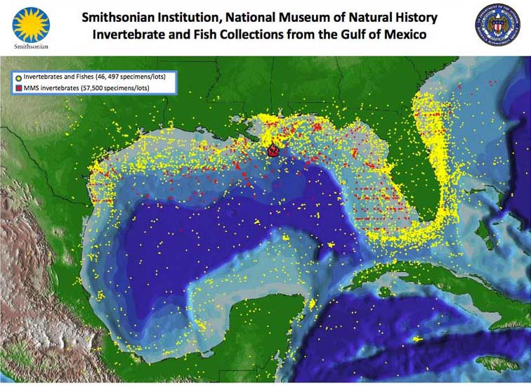This map shows the localities represented by the Gulf of Mexico collection of the Smithsonian Institution's National Museum of Natural History.<div class='credit'><strong>Credit:</strong> This map shows the localities represented by the Gulf of Mexico collection of the Smithsonian Institution's National Museum of Natural History.</div>