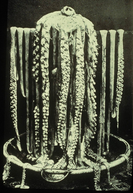 This 1874 photo of a squid draped over a bathtub was the first ever taken of a giant squid. It belonged to Reverend Moses Harvey of Newfoundland.<div class='credit'><strong>Credit:</strong> This 1874 photo of a squid draped over a bathtub was the first ever taken of a giant squid. It belonged to Reverend Moses Harvey of Newfoundland.</div>