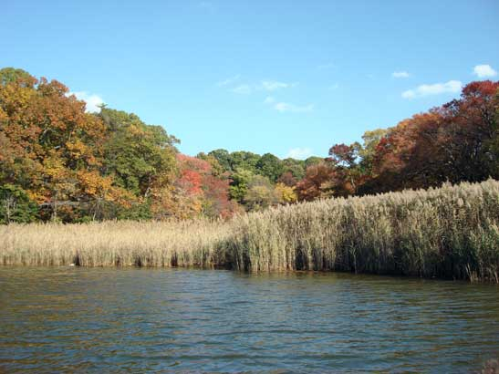 A landscape photo of a shoreline with tall grass-like plants lining the water's edge. <div class='credit'><strong>Credit:</strong> A landscape photo of a shoreline with tall grass-like plants lining the water's edge. </div>