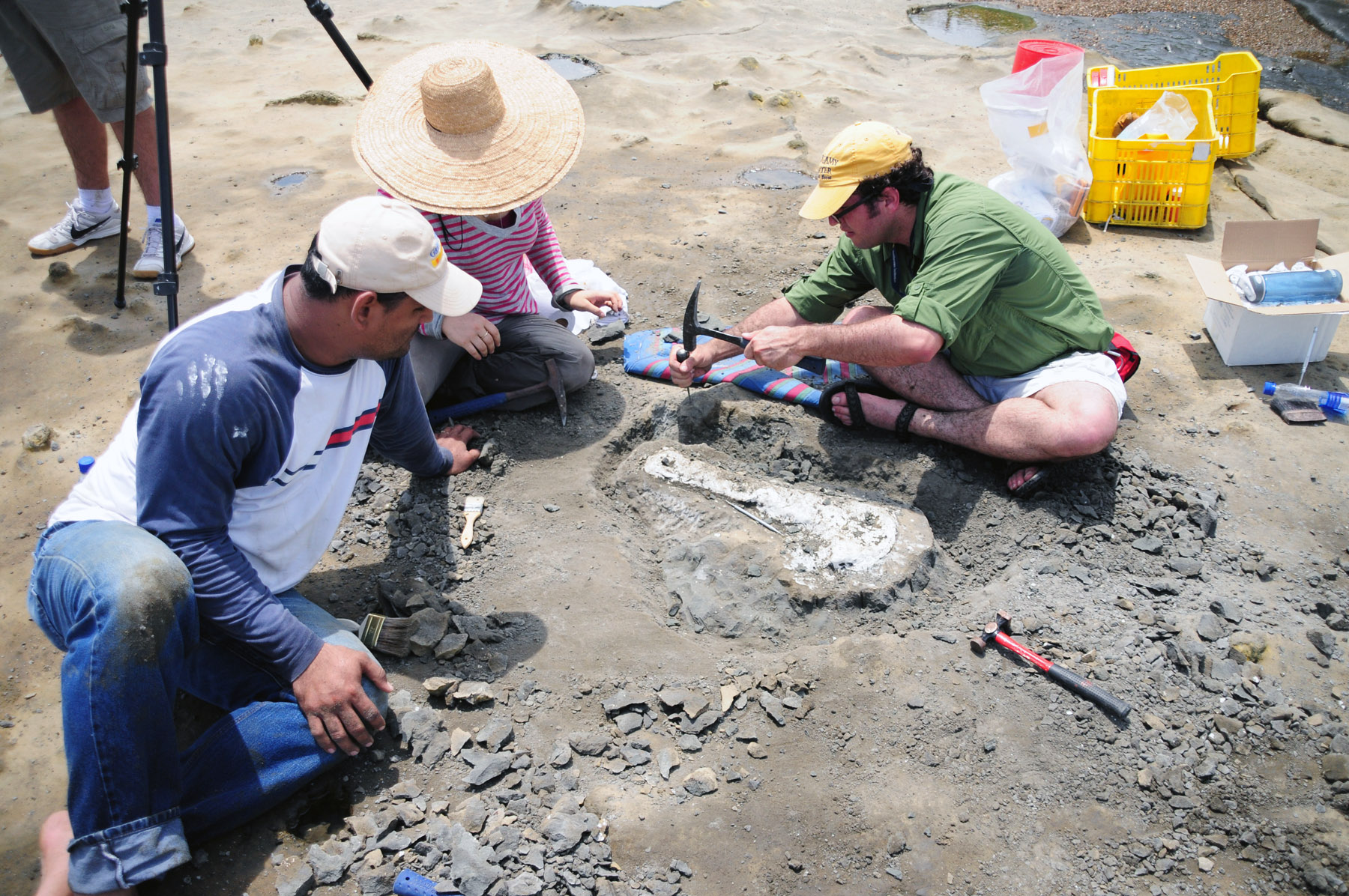 Smithsonian Scientists Dig a Trench Around a squalodontid Skull<div class='credit'><strong>Credit:</strong> Smithsonian Scientists Dig a Trench Around a squalodontid Skull</div>