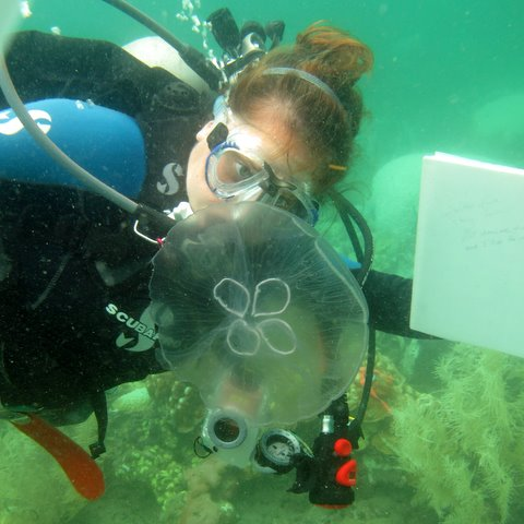 Amanda Feuerstein Scuba Diving with Jellyfish<div class='credit'><strong>Credit:</strong> Amanda Feuerstein Scuba Diving with Jellyfish</div>