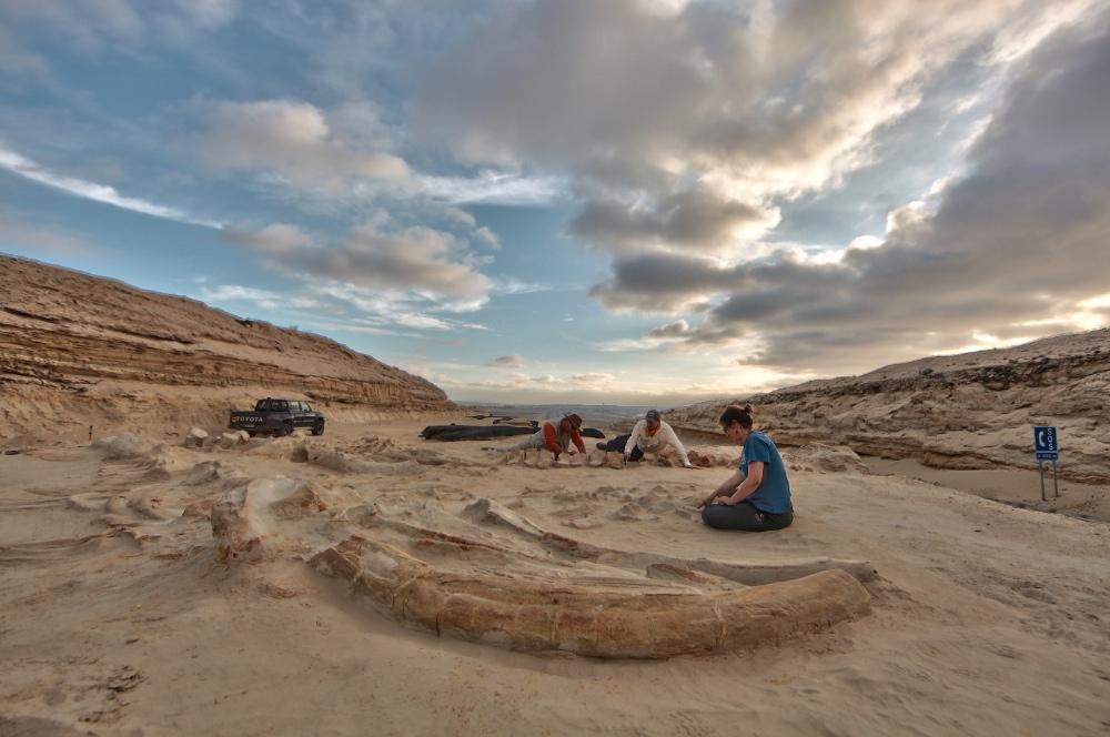 Fossil Whale Digsite at Cerro Ballena, Chile<div class='credit'><strong>Credit:</strong> Fossil Whale Digsite at Cerro Ballena, Chile</div>