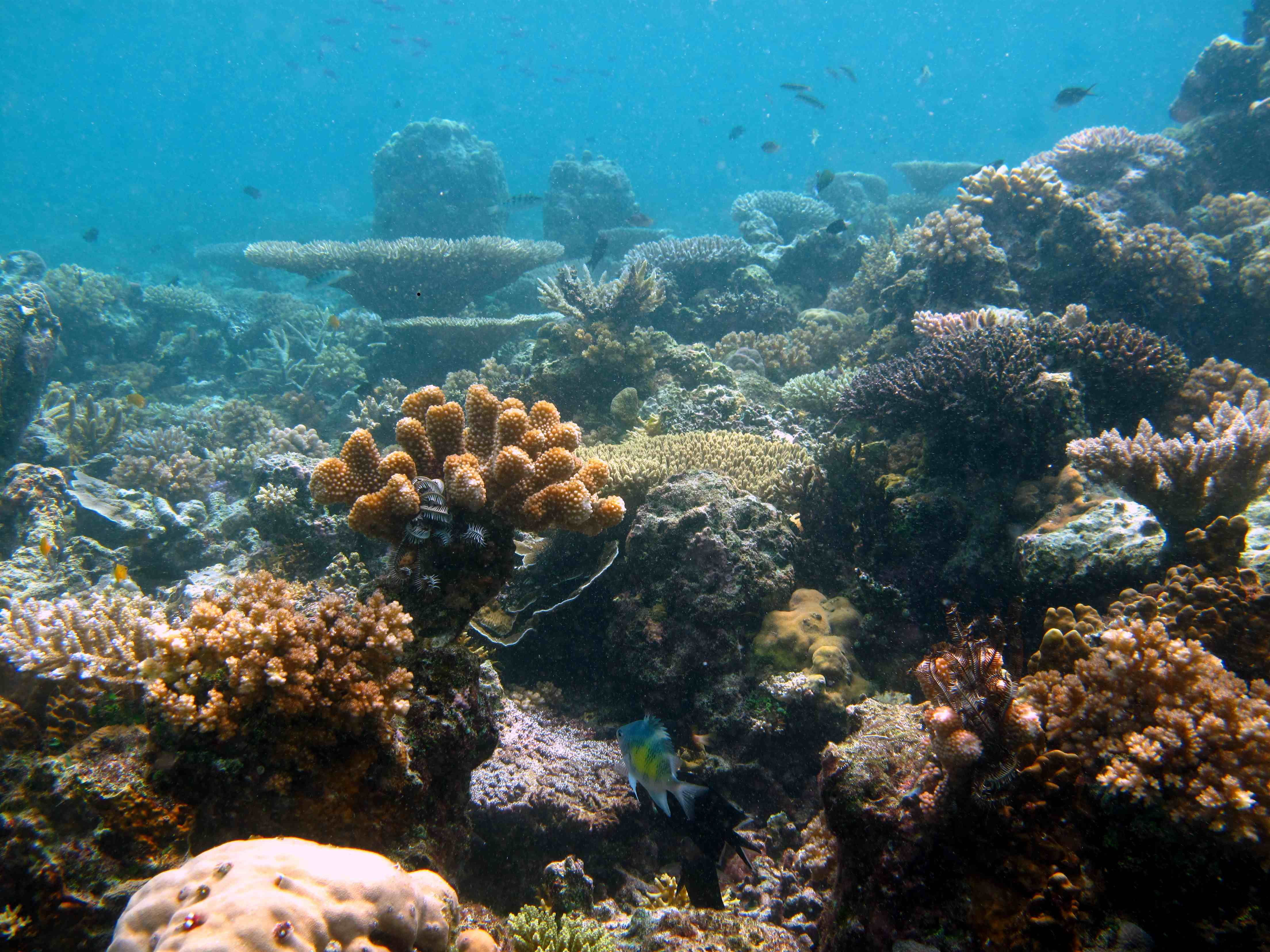 A healthy coral reef far away from CO2 seeps where the pH is still unaffected<div class='credit'><strong>Credit:</strong> A healthy coral reef far away from CO2 seeps where the pH is still unaffected</div>