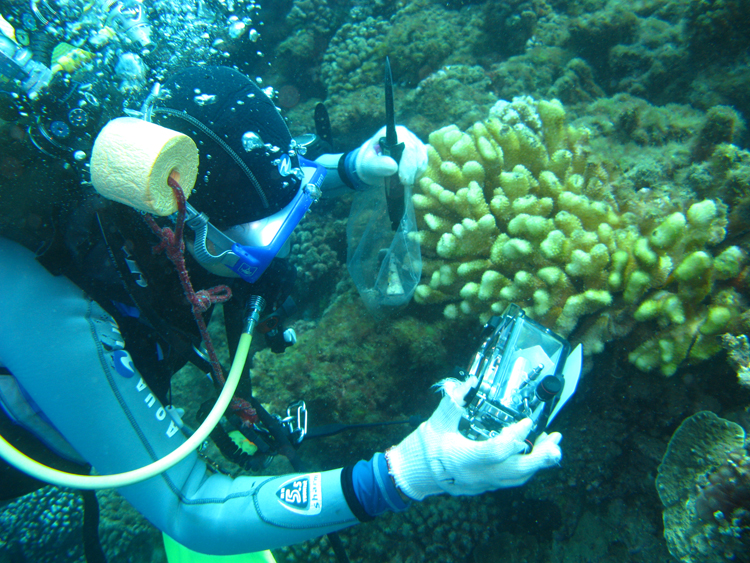 A diver on the reef near Moorea collects samples.<div class='credit'><strong>Credit:</strong> A diver on the reef near Moorea collects samples.</div>