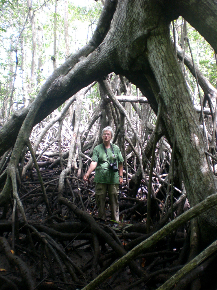Dr. Candy Feller is framed by the roots of a mangrove tree on Panama's Pacific coast.<div class='credit'><strong>Credit:</strong> Dr. Candy Feller is framed by the roots of a mangrove tree on Panama's Pacific coast.</div>