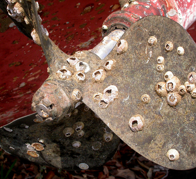 Boat Propeller Fouled With Barnacles<div class='credit'><strong>Credit:</strong> Boat Propeller Fouled With Barnacles</div>