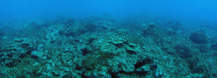 Overfishing and sedimentation have heavily impacted this reef off the coast of Guam.<div class='credit'><strong>Credit:</strong> Overfishing and sedimentation have heavily impacted this reef off the coast of Guam.</div>