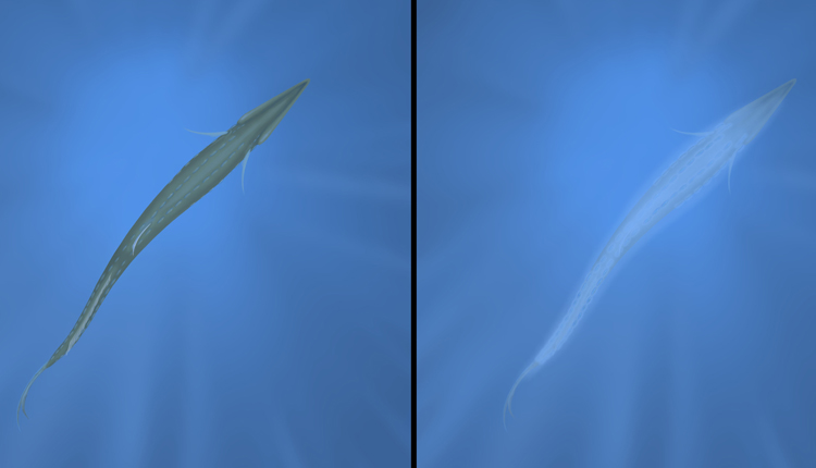This fish is using counterillumination to disappear. At left it stands out against the light above it. At right, with bioluminescent structures lit, it blends in.<div class='credit'><strong>Credit:</strong> This fish is using counterillumination to disappear. At left it stands out against the light above it. At right, with bioluminescent structures lit, it blends in.</div>