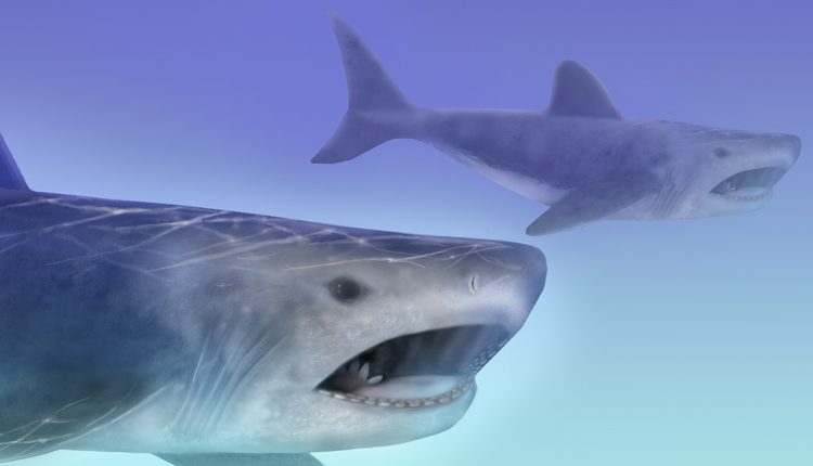 Artistic rendering of an ancient shark, Helicoprion.<div class='credit'><strong>Credit:</strong> Artistic rendering of an ancient shark, Helicoprion.</div>