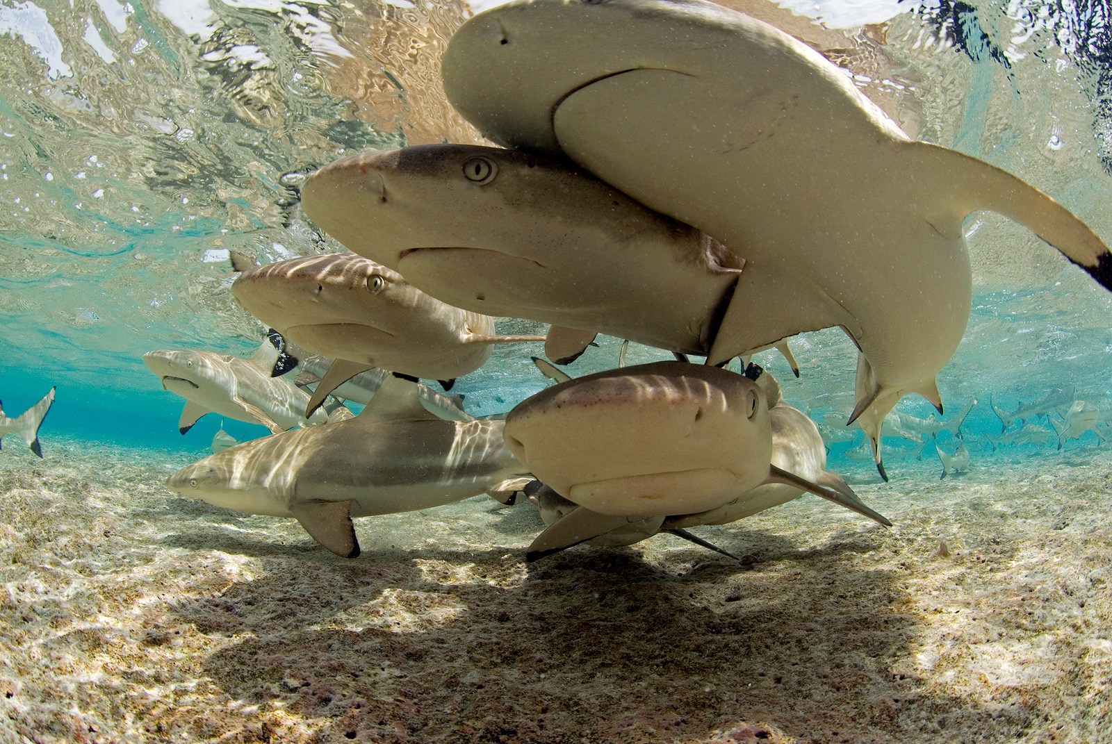 An underwater photo of sharks<div class='credit'><strong>Credit:</strong> An underwater photo of sharks</div>