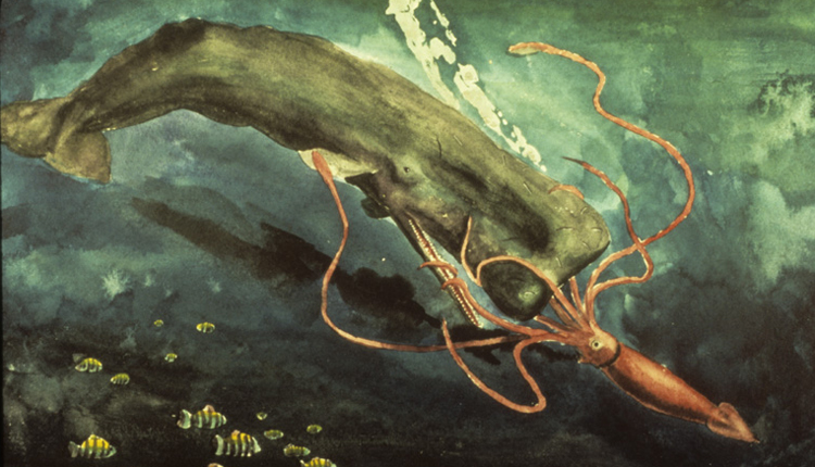 In this painting, a giant squid engages in a struggle for survival with a sperm whale.<div class='credit'><strong>Credit:</strong> In this painting, a giant squid engages in a struggle for survival with a sperm whale.</div>
