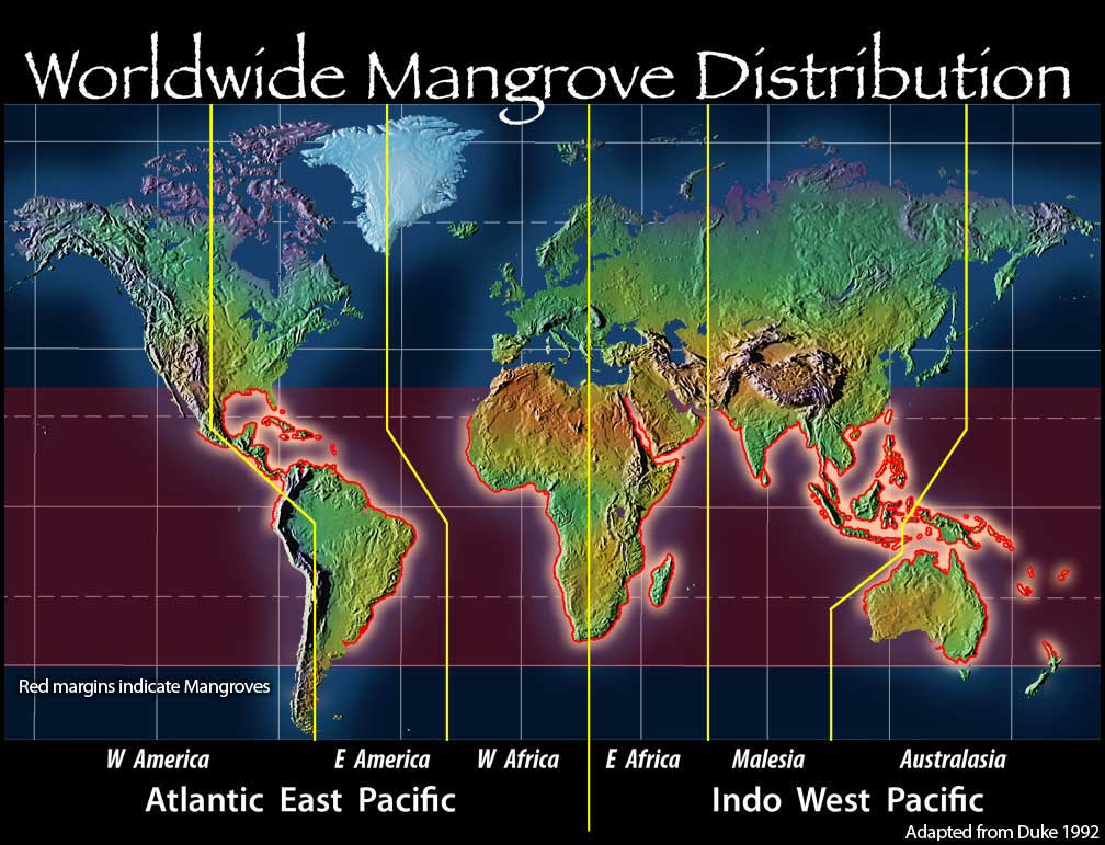 Mangroves Range<div class='credit'><strong>Credit:</strong> Mangroves Range</div>
