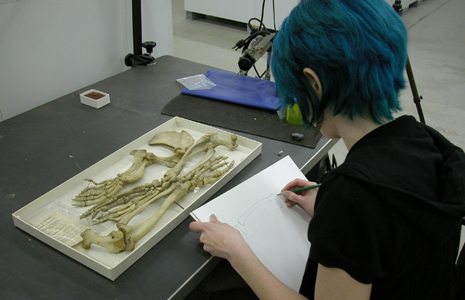 An artist sketches the preserved bones of a specimen in the Smithsonian's collection. <div class='credit'><strong>Credit:</strong> An artist sketches the preserved bones of a specimen in the Smithsonian's collection. </div>