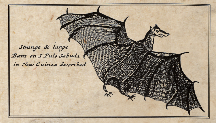 "Three hundred year old pen and ink drawing of a ""strange and large"" bat.<div class='credit'><strong>Credit:</strong> Three hundred year old pen and ink drawing of a ""strange and large"" bat.</div>"