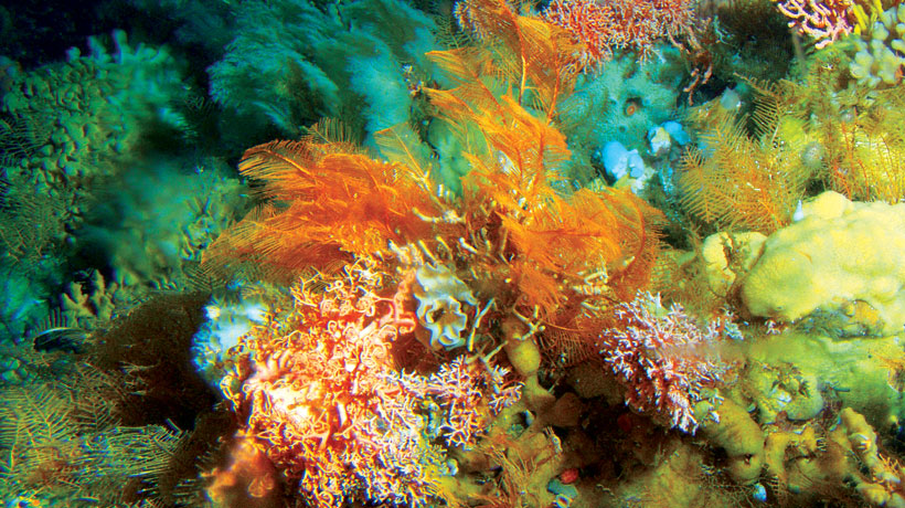 Deep-sea corals form an underwater garden off the coast of Alaska.<div class='credit'><strong>Credit:</strong> Deep-sea corals form an underwater garden off the coast of Alaska.</div>