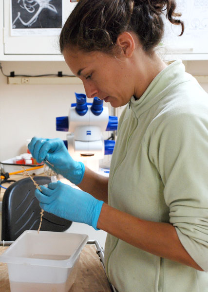 A marine scientist performs a genetic analysis on a sample of deep-sea coral to find out if it is a known or new species.<div class='credit'><strong>Credit:</strong> A marine scientist performs a genetic analysis on a sample of deep-sea coral to find out if it is a known or new species.</div>