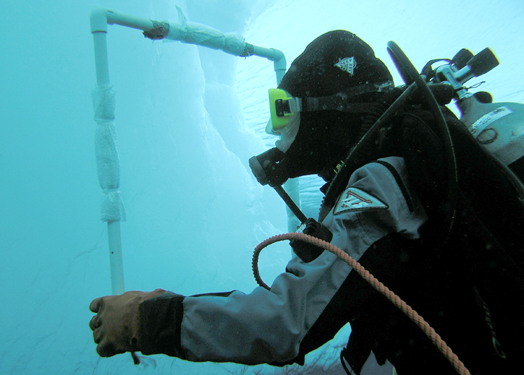 Ice divers study the abundance of marine life.<div class='credit'><strong>Credit:</strong> Ice divers study the abundance of marine life.</div>