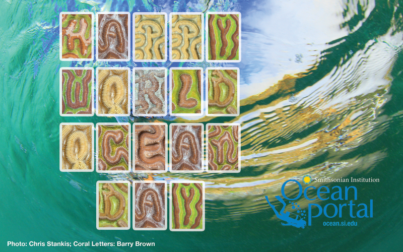 Happy World Ocean Day!