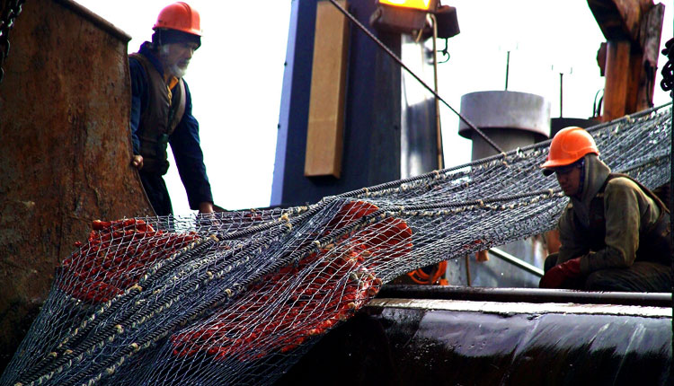 A net used to trawl the ocean floor scooped up this large specimen of deep-sea coral.<div class='credit'><strong>Credit:</strong> A net used to trawl the ocean floor scooped up this large specimen of deep-sea coral.</div>