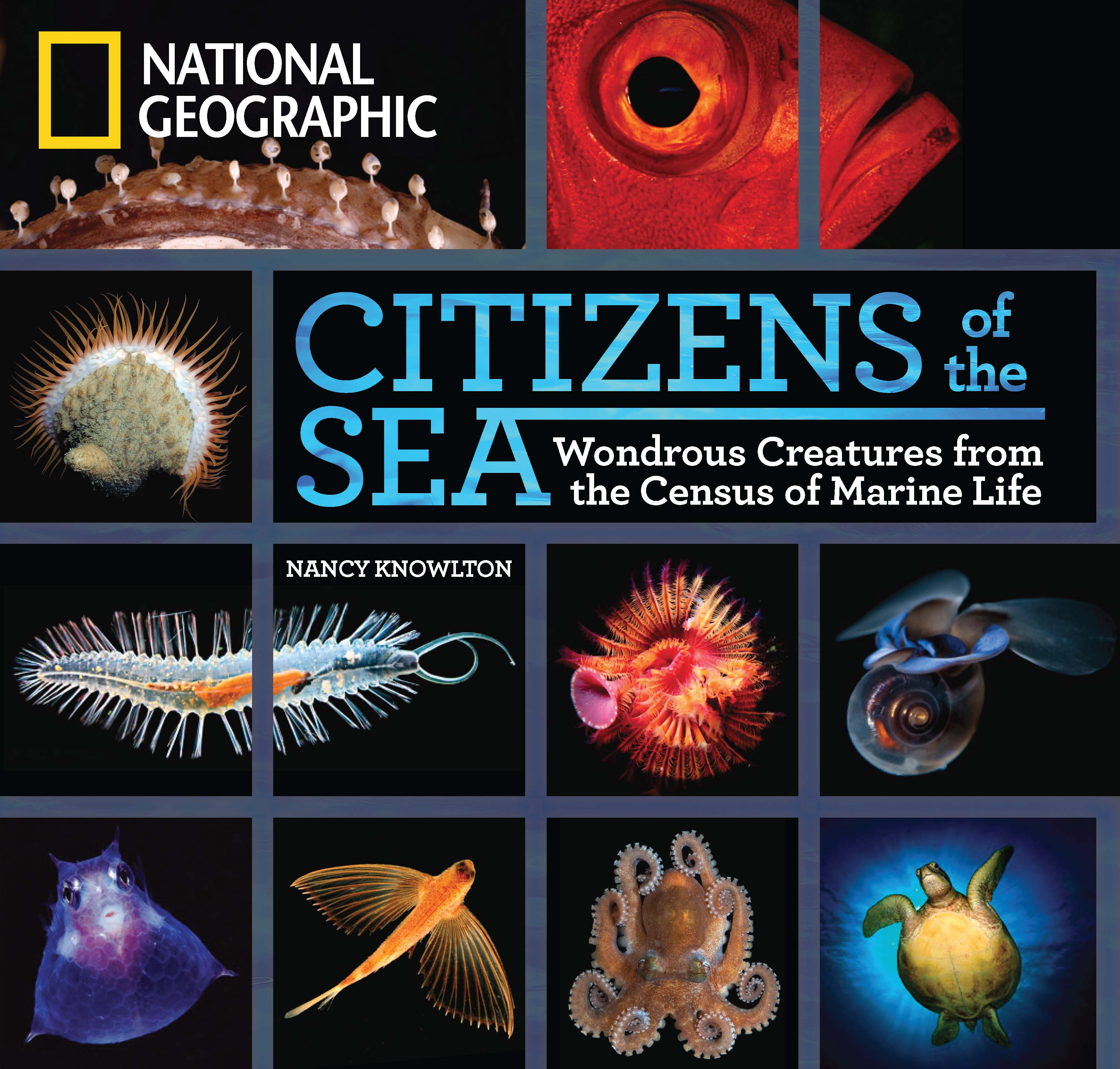 Cover of the Book Citizens of the Sea<div class='credit'><strong>Credit:</strong> Cover of the Book Citizens of the Sea</div>