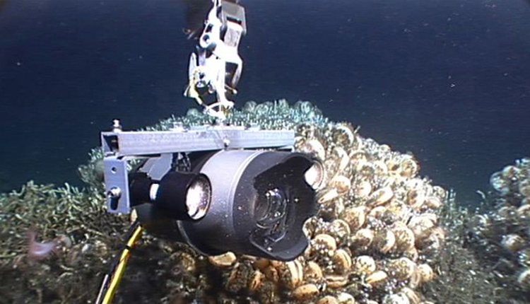 Lights attached to this deep-sea camera system enable scientists to capture detailed images of deep-sea corals in otherwise dark water.<div class='credit'><strong>Credit:</strong> Lights attached to this deep-sea camera system enable scientists to capture detailed images of deep-sea corals in otherwise dark water.</div>