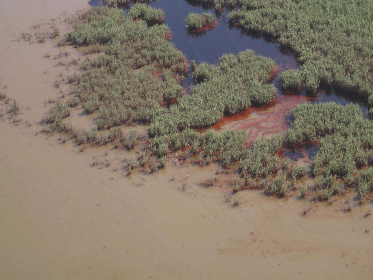 Dark brown oil floods a marsh after the Deepwater Horizon oil spill.<div class='credit'><strong>Credit:</strong> Dark brown oil floods a marsh after the Deepwater Horizon oil spill.</div>