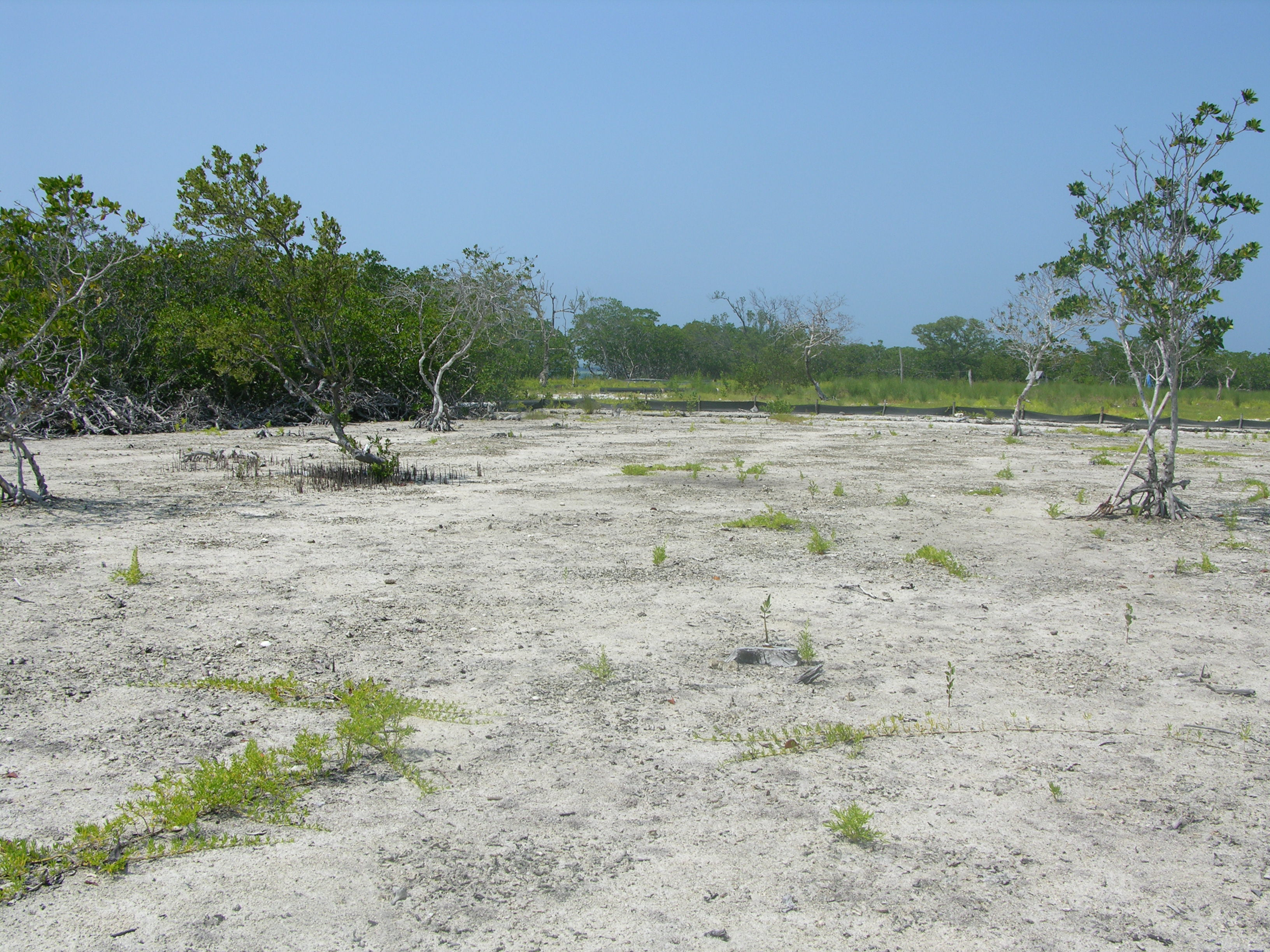 This mangrove island in Belize was cleared and dredged to create sand beaches.<div class='credit'><strong>Credit:</strong> This mangrove island in Belize was cleared and dredged to create sand beaches.</div>