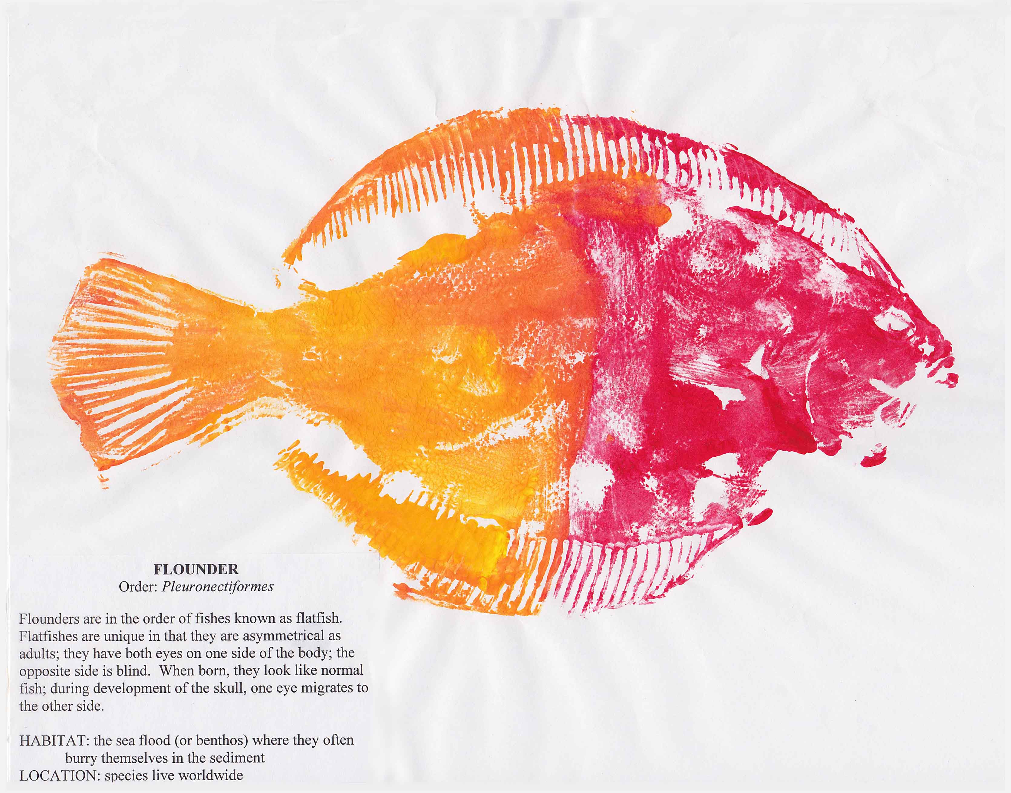 A red and yellow gyotaku-style fish print of a flounder<div class='credit'><strong>Credit:</strong> A red and yellow gyotaku-style fish print of a flounder</div>
