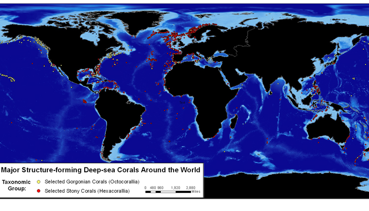 This map shows where some of the most significant species of deep-sea corals are located.<div class='credit'><strong>Credit:</strong> This map shows where some of the most significant species of deep-sea corals are located.</div>