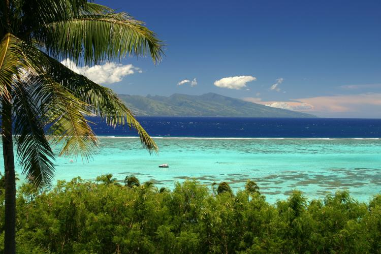 A view of the Pacific from Moorea, where scientists are working to catalog the life forms of the entire ecosystem.<div class='credit'><strong>Credit:</strong> A view of the Pacific from Moorea, where scientists are working to catalog the life forms of the entire ecosystem.</div>