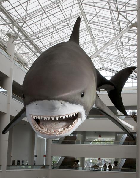 Shark Ancestors | Smithsonian Ocean Portal